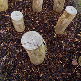 Logs standing in playground Stock Photography