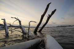 Logs sticking out of the water at sunset Royalty Free Stock Photo