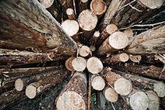 Logs store Stock Images