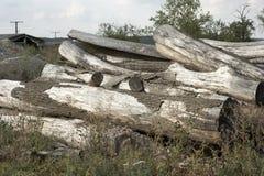 Logs temperados Imagem de Stock