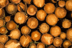 Logs texture Stock Photography
