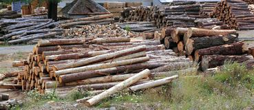 Logs timber industry trunks stacked outdoor Stock Images