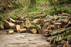 Logs of timber Royalty Free Stock Image