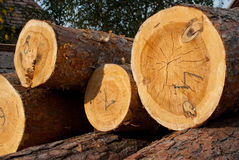 Logs of tree Royalty Free Stock Images