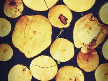The logs of the tree. Forest logs.Forest production.Harvesting of wood Stock Images