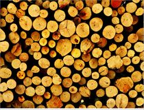 The logs of the tree. Forest logs.Forest production.Harvesting of wood Stock Photo