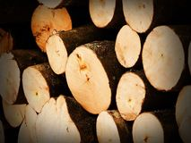 The logs of the tree. Forest logs.Forest production.Harvesting of wood Royalty Free Stock Photo