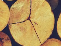 The logs of the tree. Forest logs.Forest production.Harvesting of wood Stock Photography
