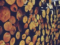 The logs of the tree. Forest logs.Forest production.Harvesting of wood Royalty Free Stock Images