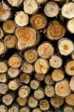 Logs from a tree on timber cutting. Royalty Free Stock Image