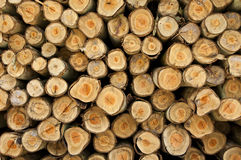 Logs from a tree on timber cutting. Stock Image