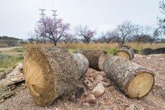 Logs. Royalty Free Stock Photo