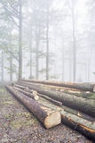 Logs trees Stock Images