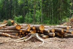 Logs of trees Royalty Free Stock Photo