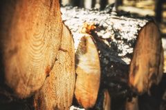 Logs of trees in the forest after felling. felled tree trunks. Logging. Selective focus on photo.  Royalty Free Stock Photos