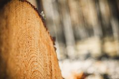 Logs of trees in the forest after felling. felled tree trunks. Logging. Selective focus on photo.  Royalty Free Stock Photography
