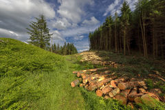 Logs of trees in the forest after felling, Scotland , Dollar Glen Stock Photography