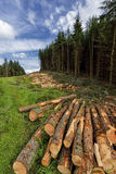 Logs of trees in the forest after felling, Scotland , Dollar Glen Royalty Free Stock Image