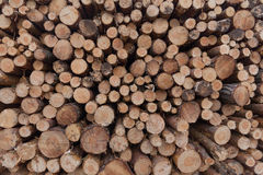 Logs of trees / stacked wood / trees background Stock Photo
