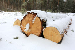 Logs under snow Royalty Free Stock Photo