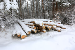 Logs under snow Stock Photography