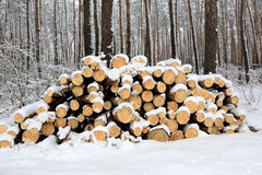 Logs under snow Royalty Free Stock Photography