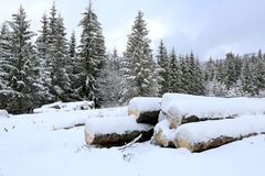 Logs under snow on winter meadow in forest. Wooden logs under snow on winter meadow in forest Royalty Free Stock Photo