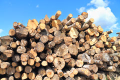 Logs various species of deciduous trees Royalty Free Stock Image