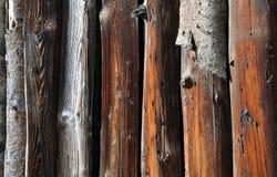 Logs velhos da árvore fotografia de stock royalty free