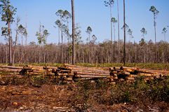 Logging timber royalty free stock photos
