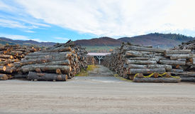 Logs in warehouse Stock Photo