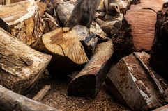 Logs were cut for sent to processing plant Royalty Free Stock Photo