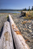 Logs on a west coast beach Royalty Free Stock Image