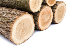 Logs on white background, studio photo, acacias tree. For winter time heating - isolated royalty free stock photos