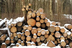 Logs In winter. Photograph of logs stacked up coverd in snow Royalty Free Stock Images