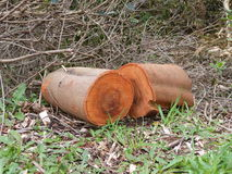 Logs wood fire orange bark cut chainsaw Royalty Free Stock Photography