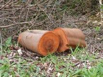 Logs wood fire orange bark cut chainsaw Royalty Free Stock Photography
