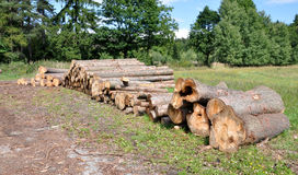 Logs of wood in the forest Stock Images