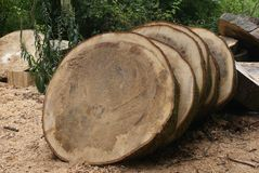 Logs of wood for making tables Stock Photography
