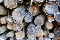 The logs and wood products,which were folded on a bunch Royalty Free Stock Images