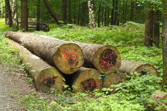 Logs in a Wood Royalty Free Stock Photography