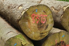 Logs in a Wood Royalty Free Stock Images
