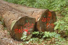 Logs in a Wood Stock Image