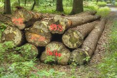 Logs in a Wood Royalty Free Stock Photo