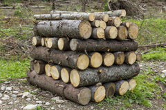 Logs of wood stacked in a saw-mill Stock Photography