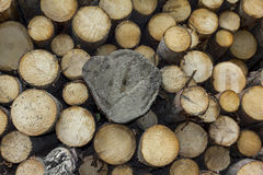 Logs of wood stacked in a saw-mill Royalty Free Stock Photo