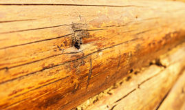 Logs wooden frame large Stock Photography