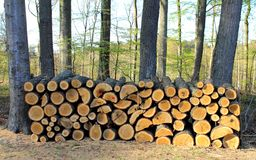 Logs of wooden piles Royalty Free Stock Photos