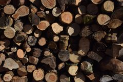 Logs in a Woodpile. End view of some felled timber. A pile of Logs in a woodpile Stock Images