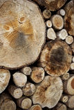 Logs in the woods Royalty Free Stock Image